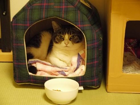 まるの猫ハウス.JPG